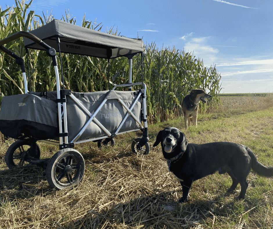 Hunde Bollerwagen im Test