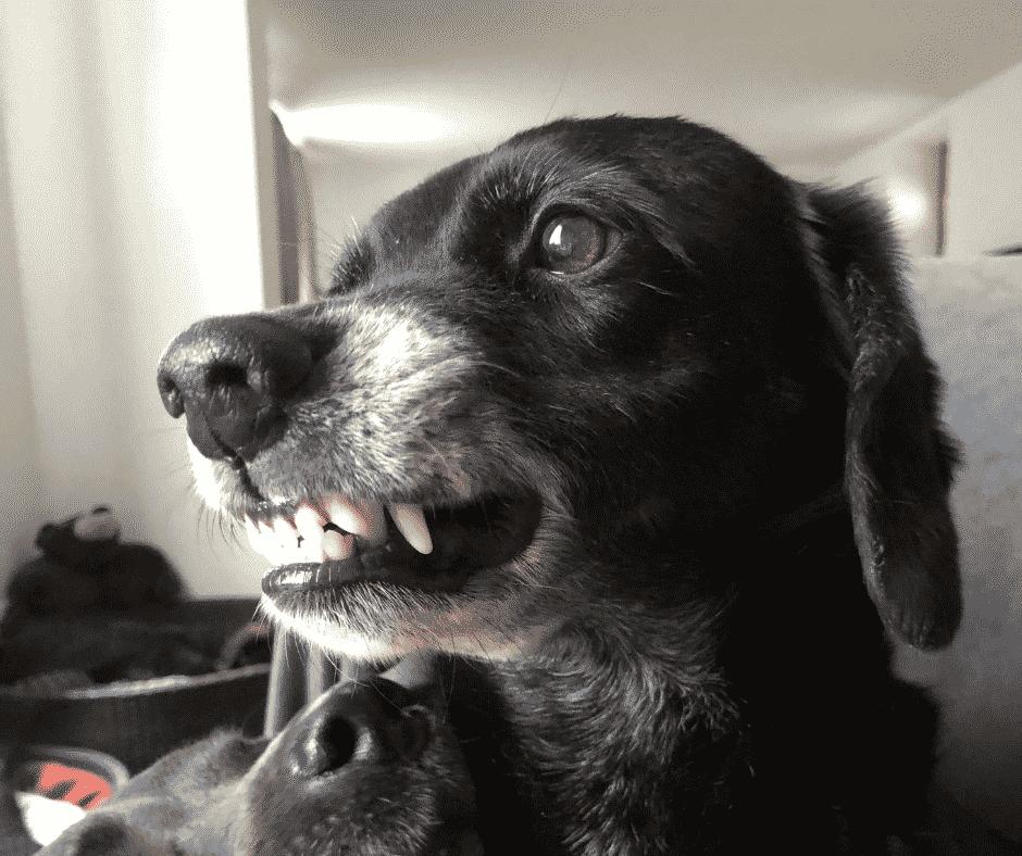 Körpersprache in der Hundeerziehung