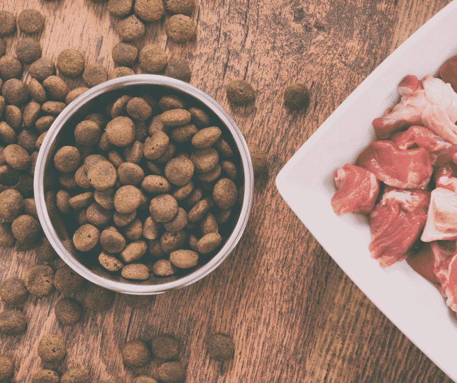 das beste hundefutter vs Trockenfutter