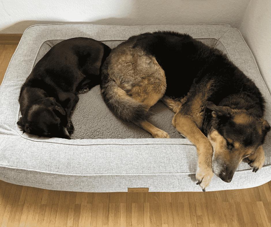 Orthopädisches Hundebett - Platz für 2 Hunde
