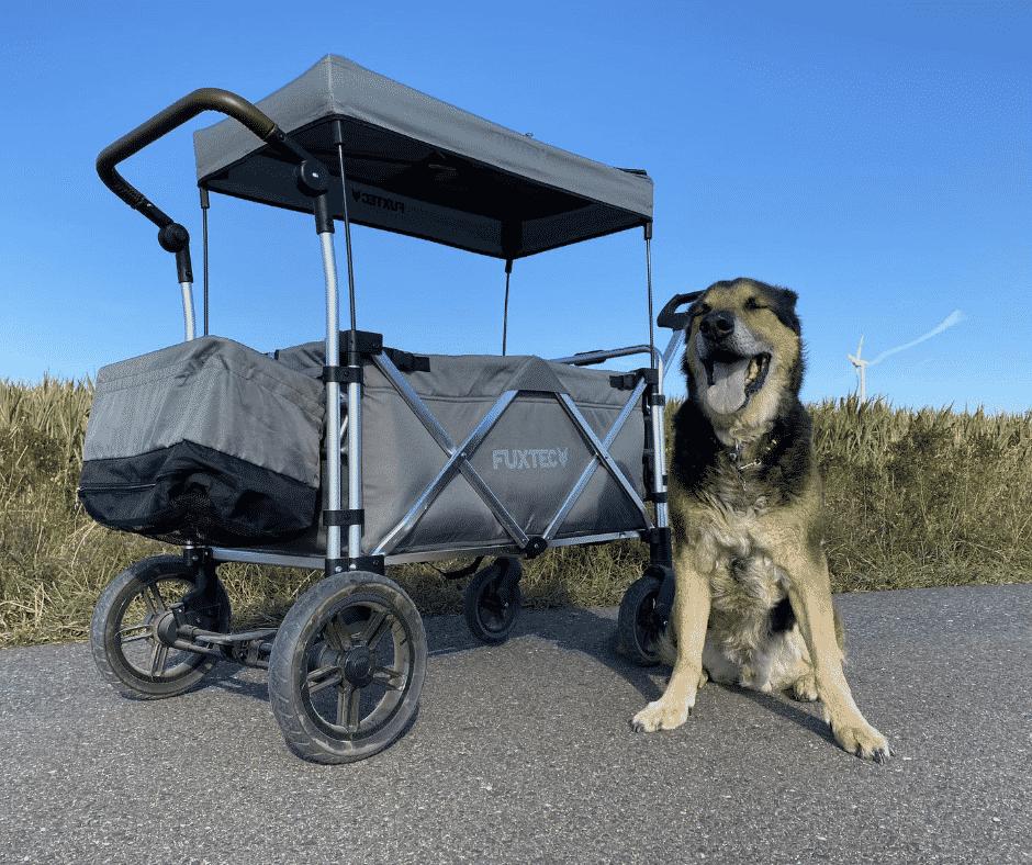 Hunde Bollerwagen und Milo