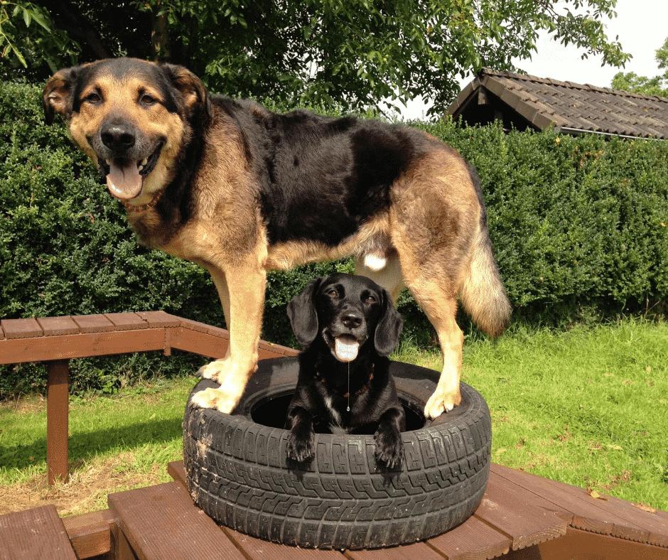 Hundeerziehungs-Tipps