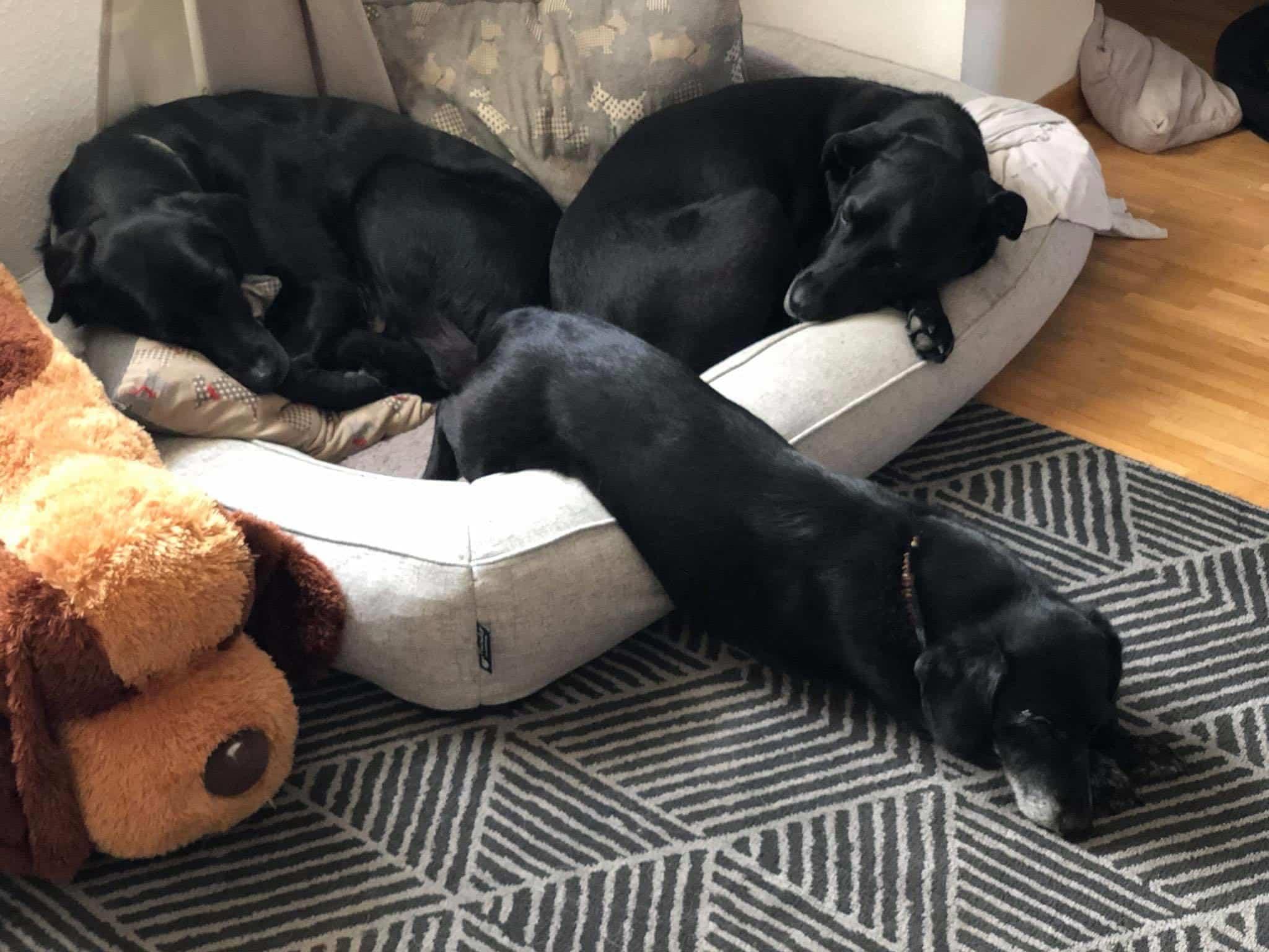 Orthopädisches Hundebett im Test
