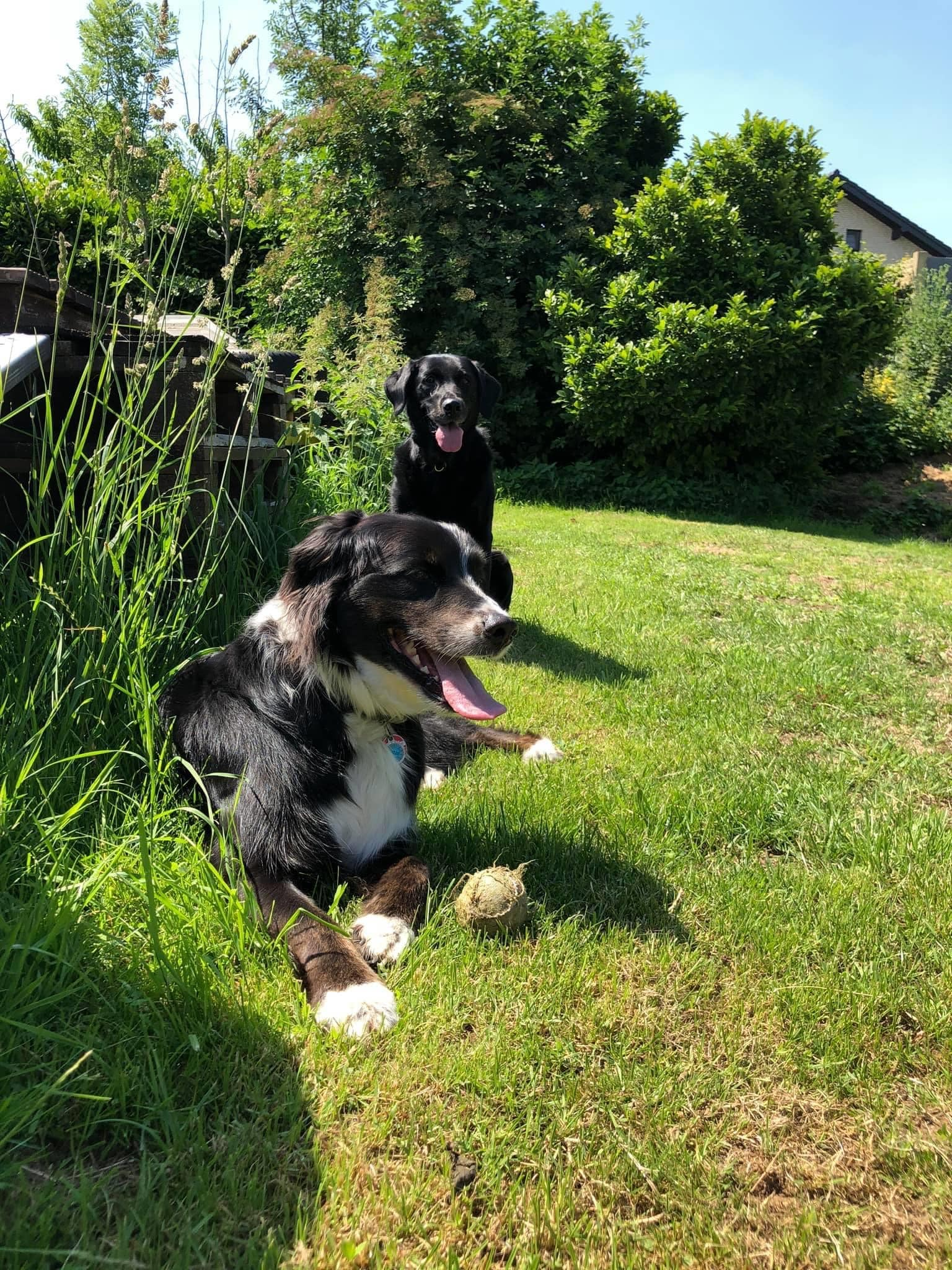 Spielen in der Hundepension