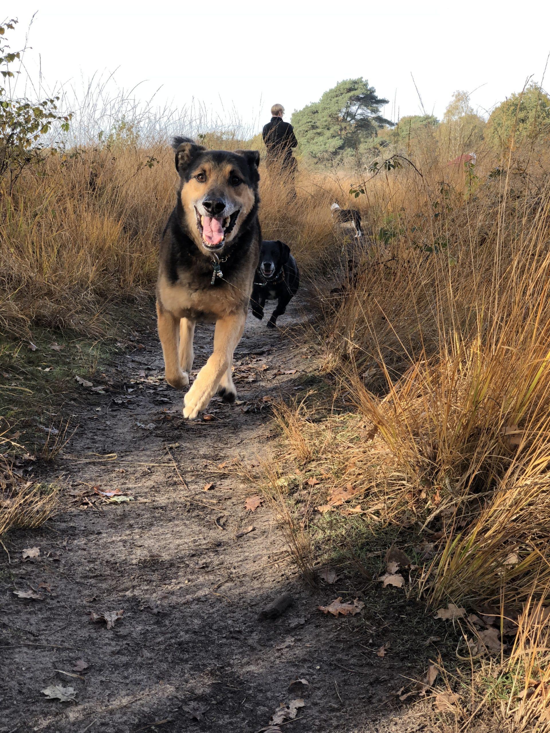 Grundkommandos in der Hundeerziehung
