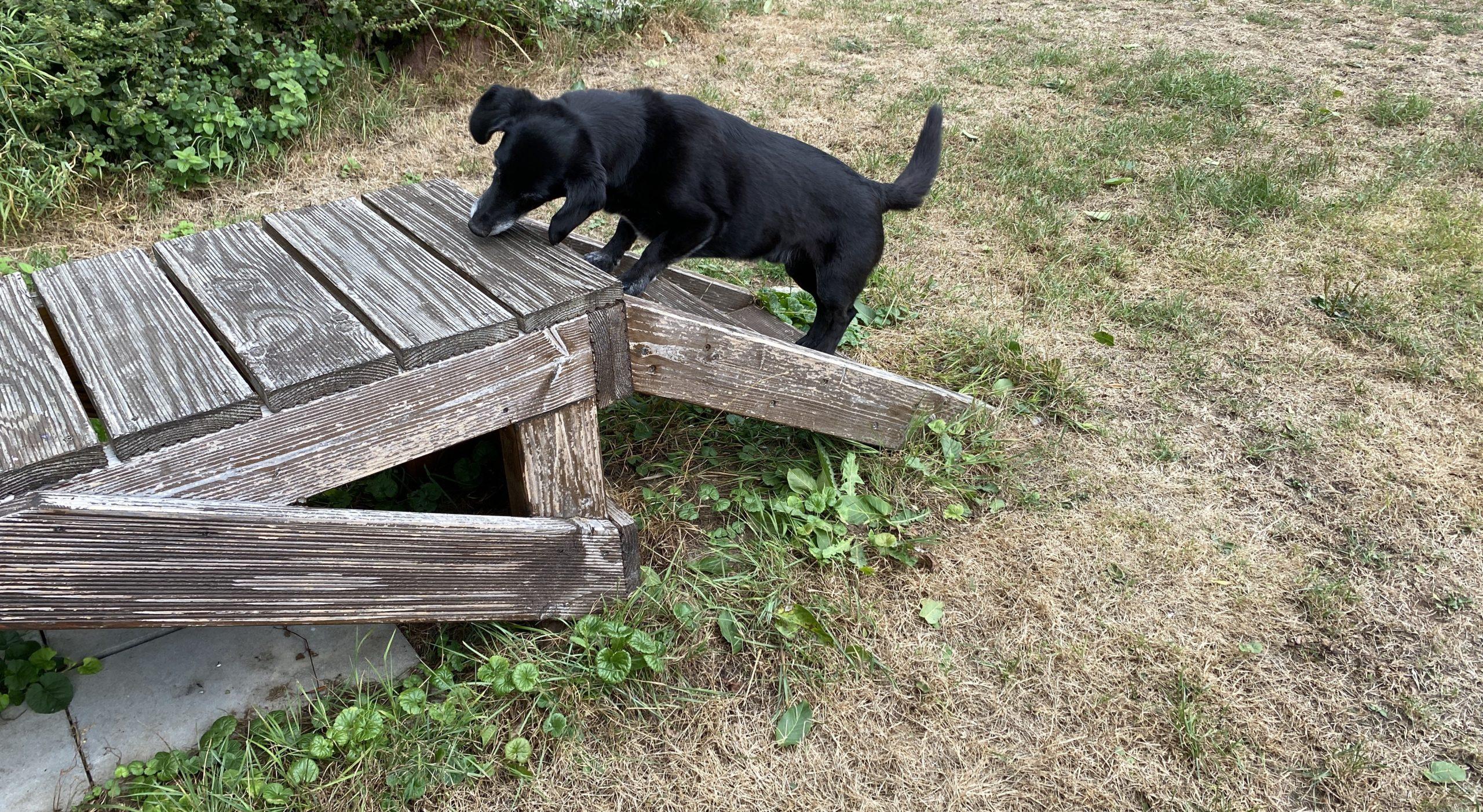 Hunde-Suchspiele im Garten