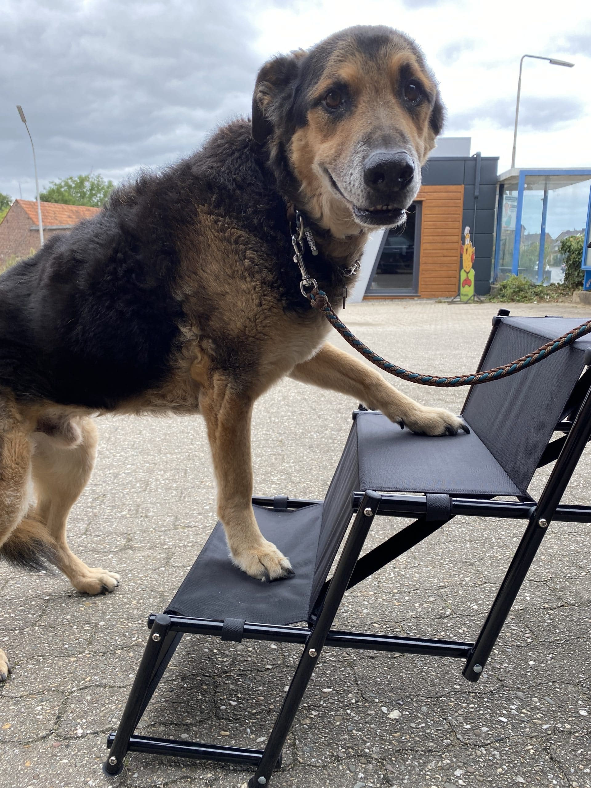 Milo testet die Hundetreppe