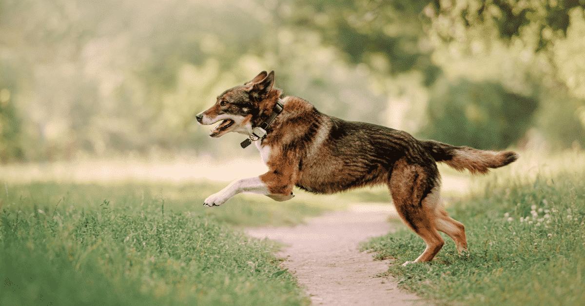Hunde GPS Tracker
