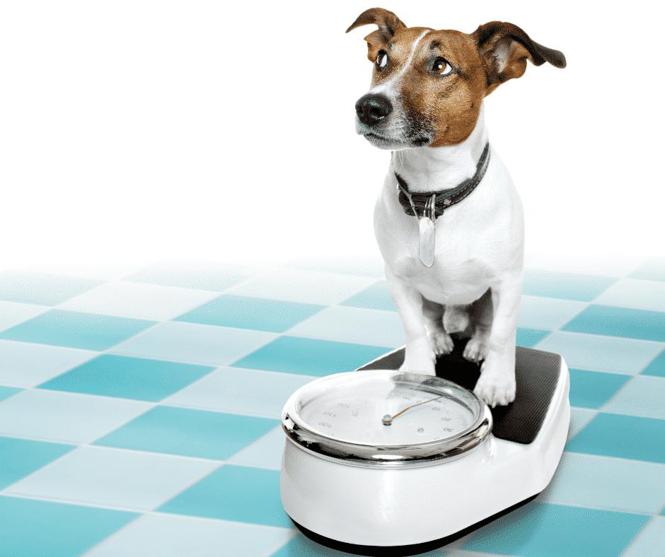 Futtermenge Hund Waage