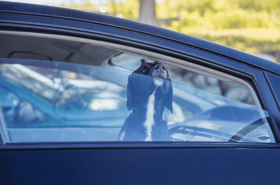 Erste Hilfe für Hunde Hitzschlag