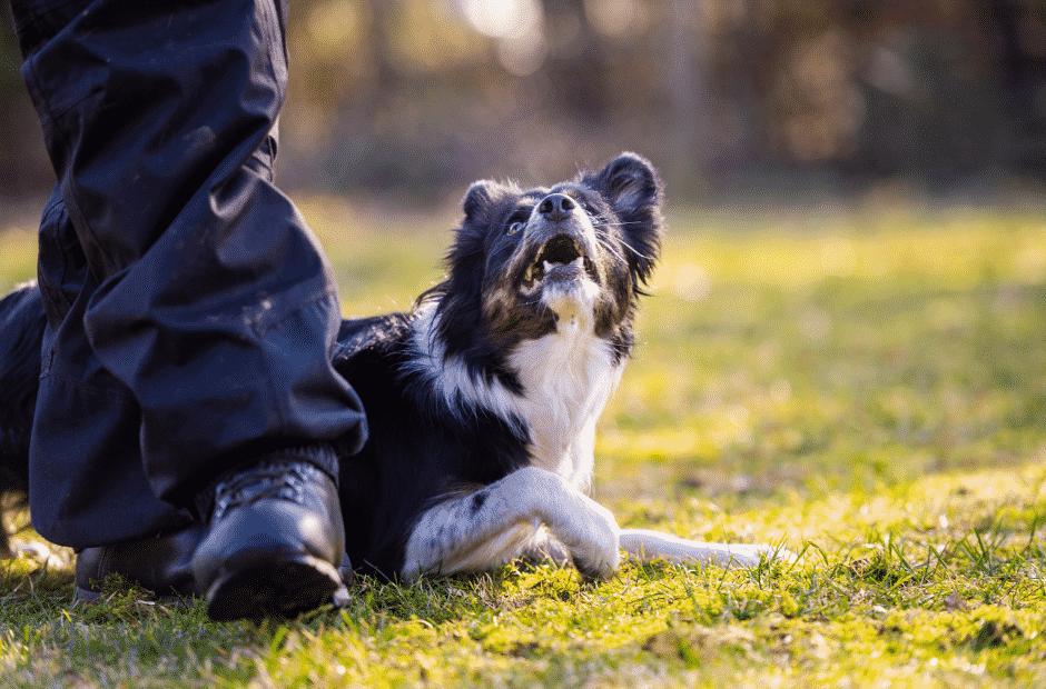 Hundetrick krabbeln