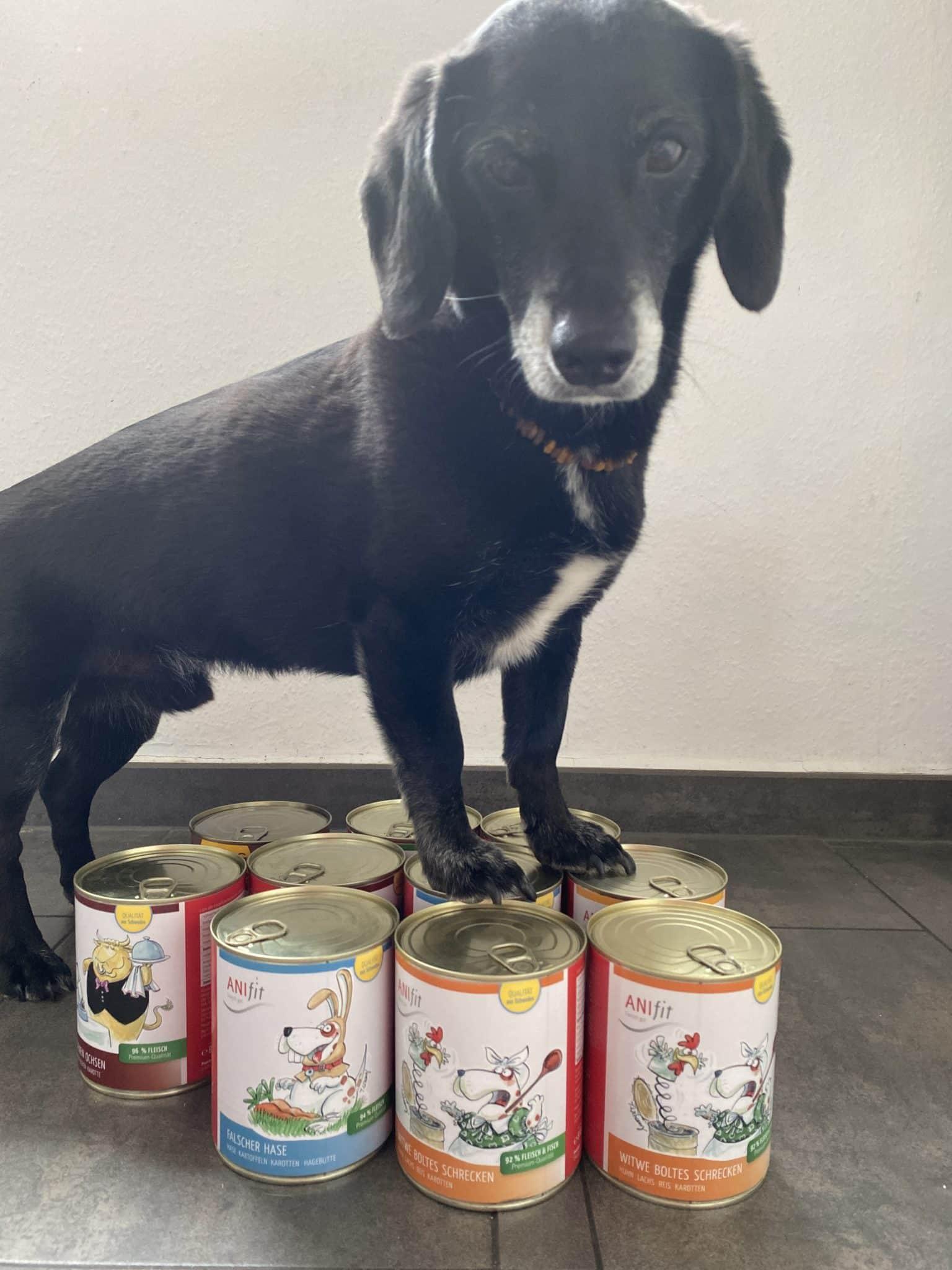 Anifit Hundefutter Urmel auf Dosen