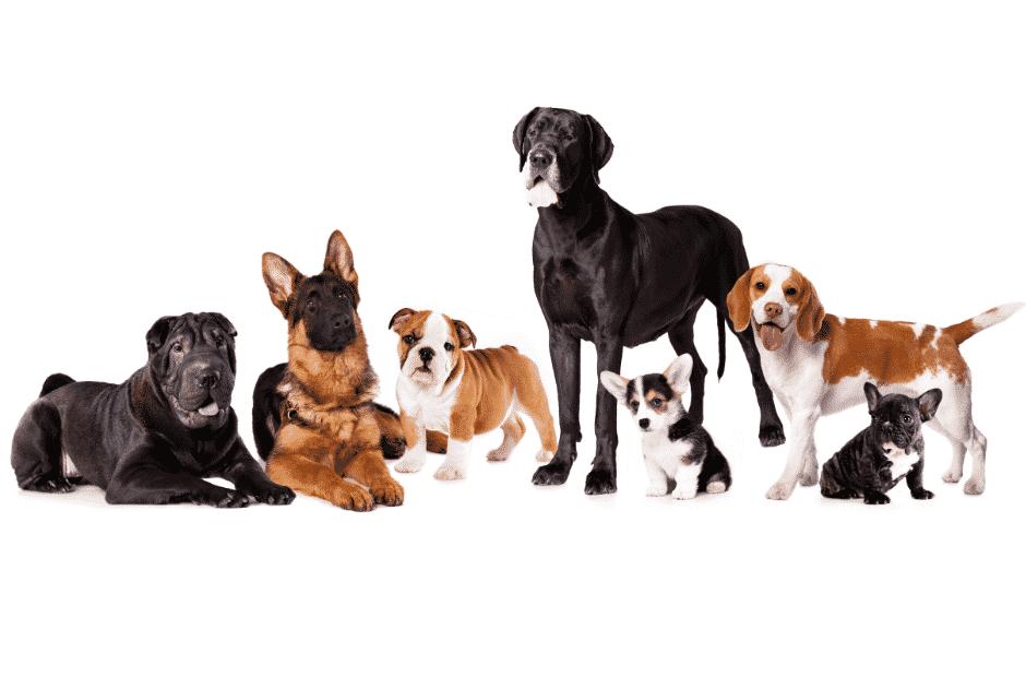 hochwertige hundefutter Hundegruppe