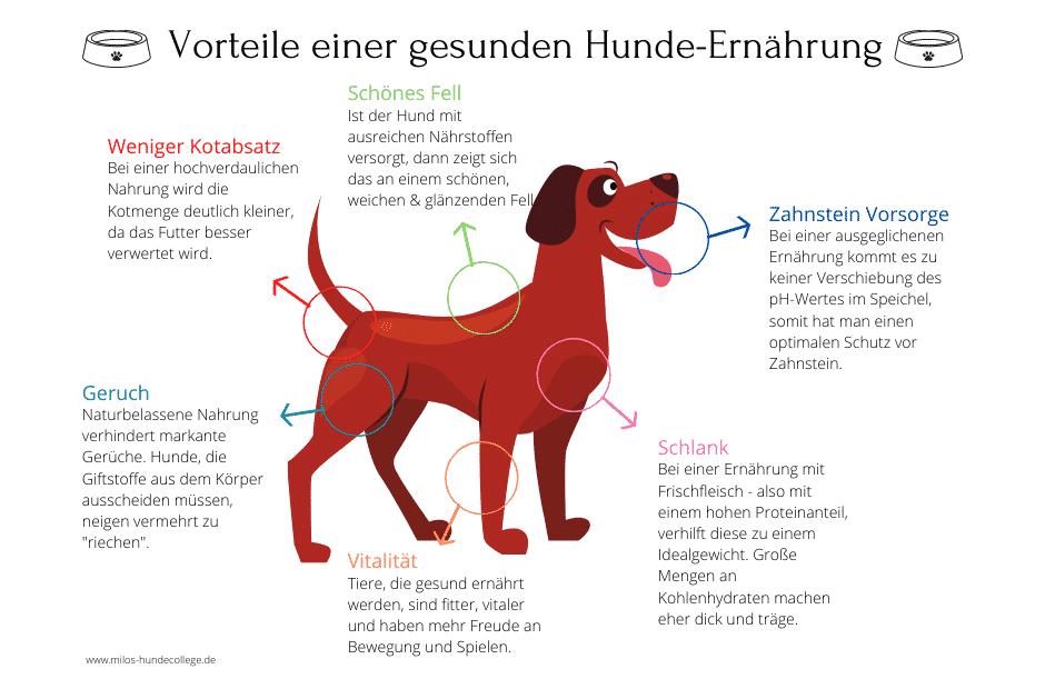Anifit Vorteile gesunde Hundeernährung