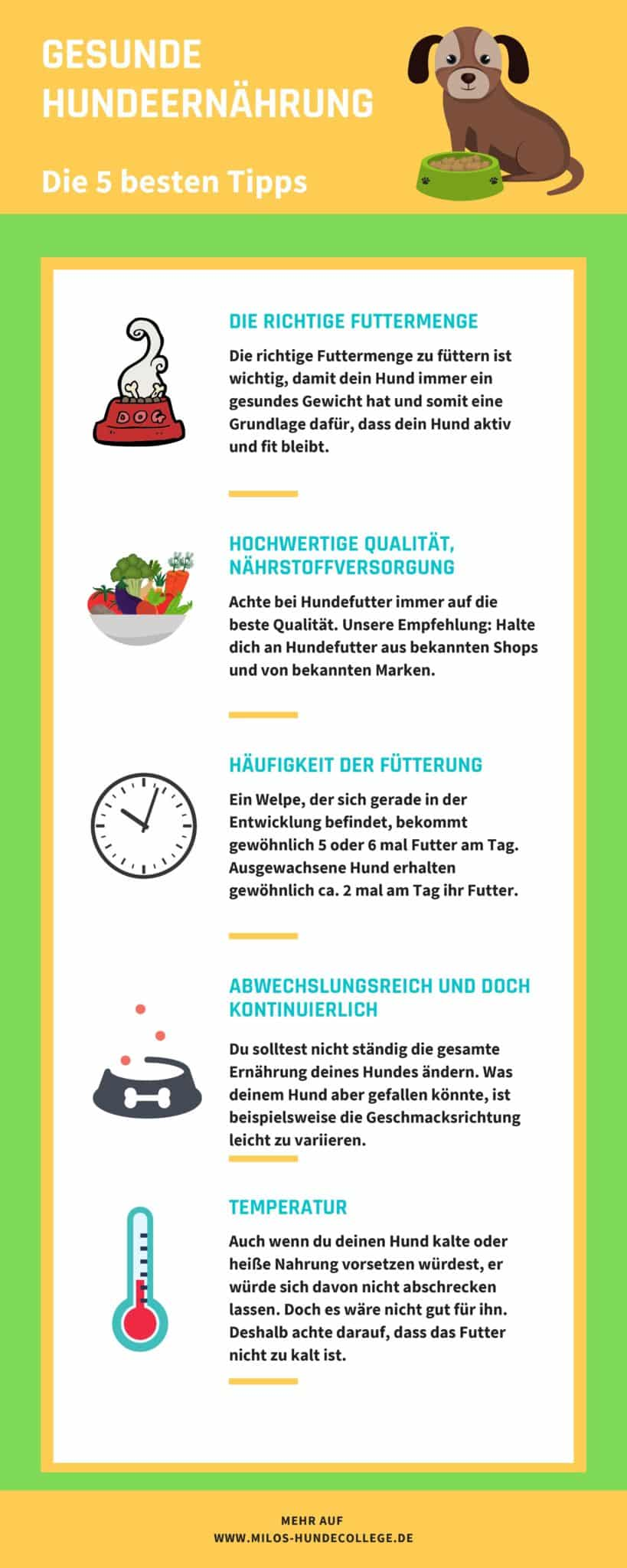 5 Tipps zur gesunden Hundeernährung